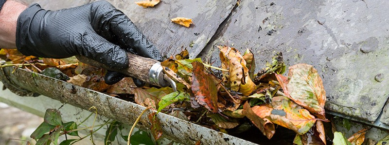 Clogged gutters pose a real threat to the health of your home. Read on to find out why!