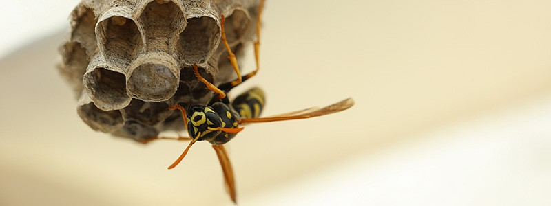 Keep your gutters bee, wasp and hornet free with the help of Ned Stevens!