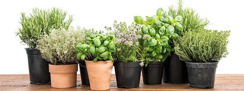 Ned Stevens has great tips on starting your herb garden.
