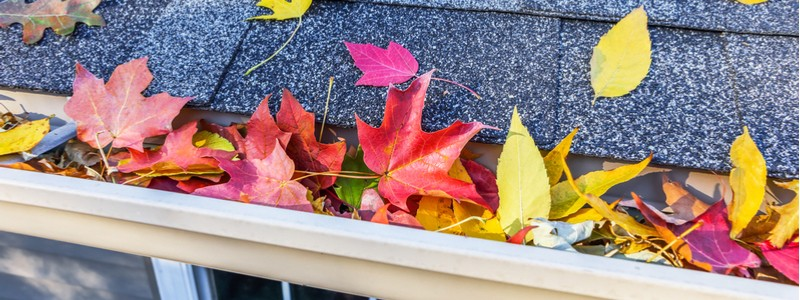 Leaves in a gutter; Don't forget to schedule your fall gutter cleaning today!