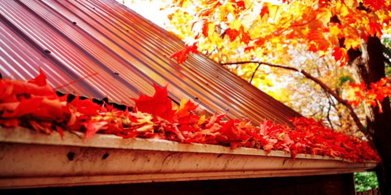 fall gutter full of leaves