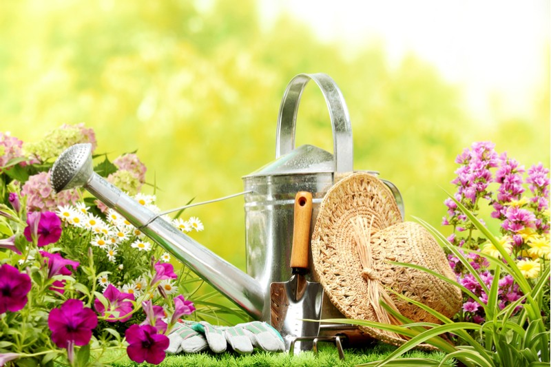 watering can and spring plants
