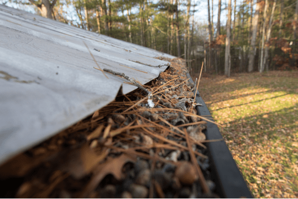 side view of clogged gutters containing pine needles in fall